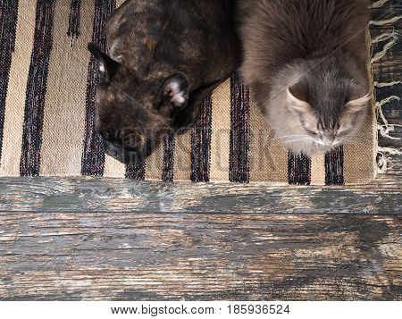 Dog and cat sleeping together on the floor Mat. The view from the top