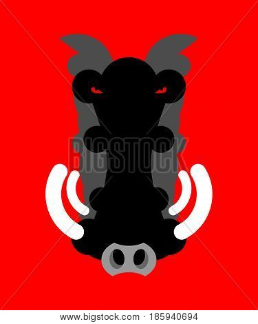 Angry boar warthog snout isolated. Head of wild aper