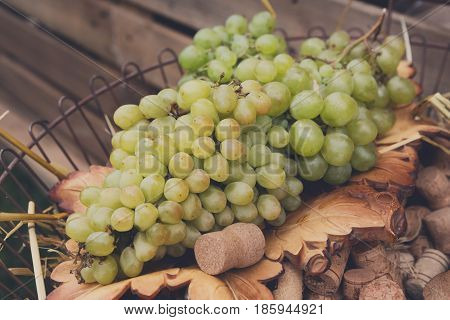 Winery, grape harvest, farmers food market. White wine ripe grapes in basket at the vineyard, selective focus