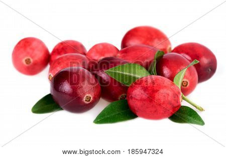 Isolated cranberries. Red cranberry with leaves isolated on white background