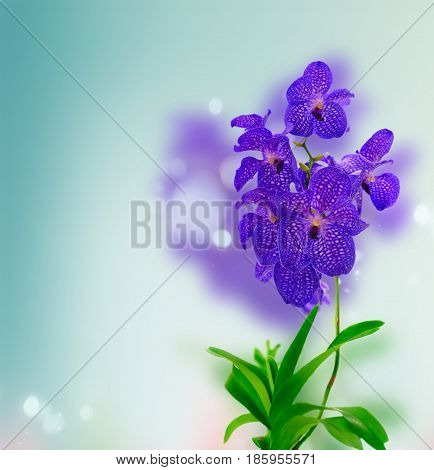 Bunch of fresh blue orchid flowers with green leaves over blue background