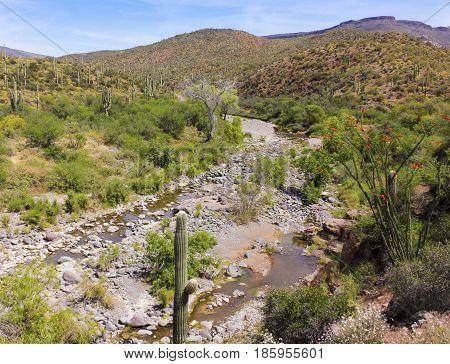 A Spur Cross Ranch Conservation Area Scene Arizona