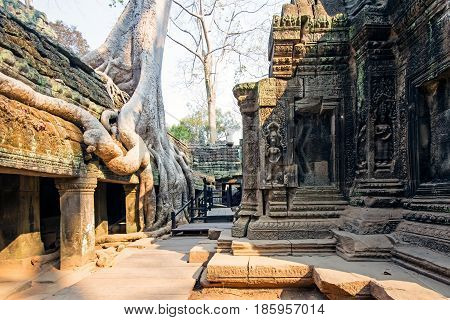 Ta Prohm Temple in Angkor Wat, Siem Reap, Cambodia