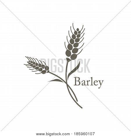 barley grain field crop harvest natural plant organic