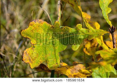 Autumn Early autumn Forest Grove Oak leaf Oak leaves Trees