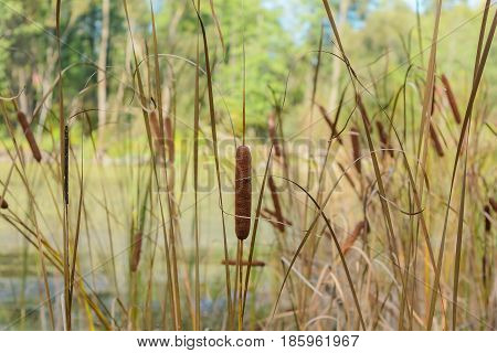 Autumn Early autumn Forest Forest river Forest swamp Grove Reeds Reeds On The Shore River Swamp