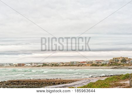 YZERFONTEIN SOUTH AFRICA - MARCH 31 2017: A view of houses and a beach with endangered black oystercatchers in front at Yzerfontein on the West Coast of the Western Cape Province