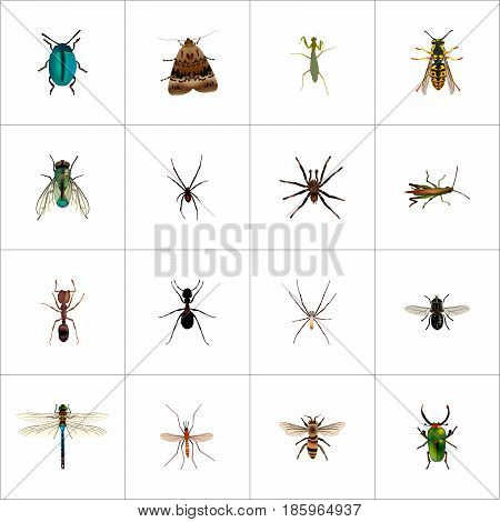 Realistic Bee, Arachnid, Damselfly And Other Vector Elements. Set Of Bug Realistic Symbols Also Includes Emmet, Gnat, Grasshopper Objects.