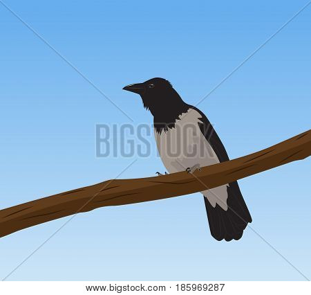 One crow sits on a branch. Vector illustration