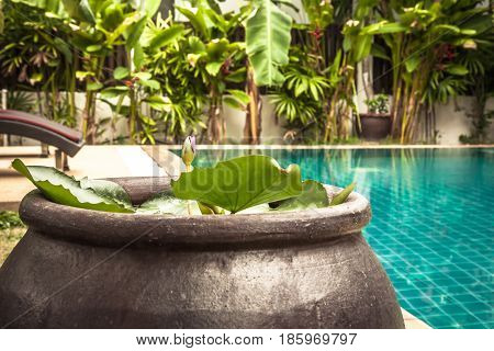 Swimming pool area with decoration bowl with water lily at private villa backyard