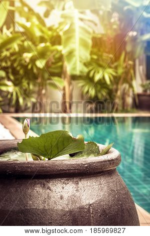 Swimming pool area with decoration bowl with water lily among lush tropical garden with sunshine at private luxury tropical villa backyard
