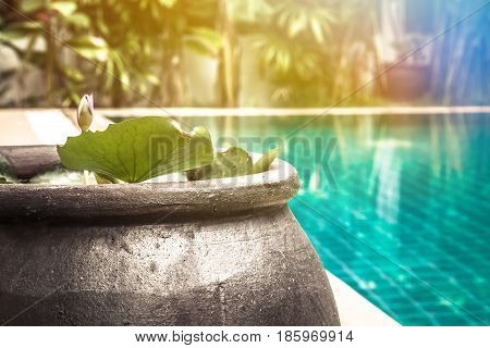 Swimming pool area with decorative asian style bowl with water lily among lush tropical garden with sunlight and copy space at private luxury tropical villa backyard