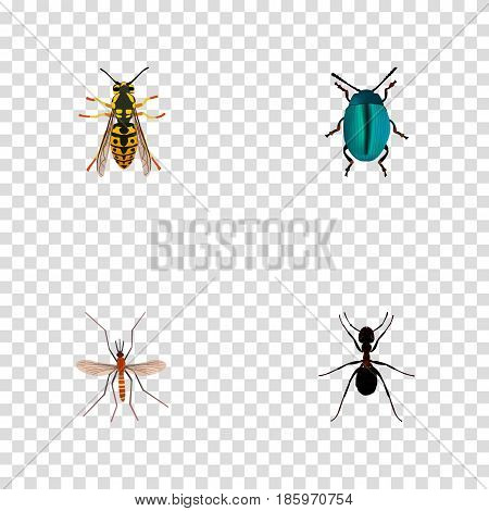 Realistic Bug, Bee, Gnat And Other Vector Elements. Set Of Insect Realistic Symbols Also Includes Dor, Wisp, Ant Objects.