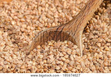 Old wheat species - grain-like triangular buckwheat seeds - in a rustic wooden shell with a wooden spoon.