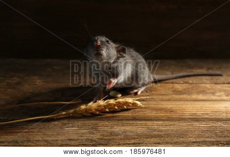 Cute little rat with wheat ear on wooden background