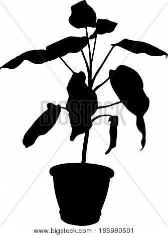 dieffenbachia the potted plant vector silhouette on white background