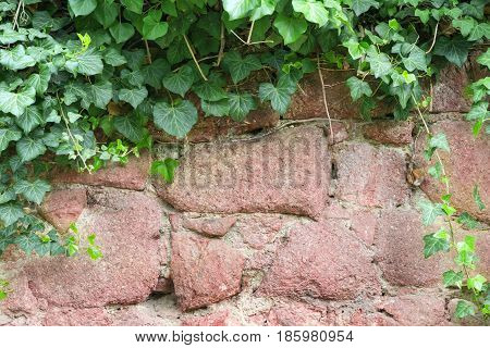Background frame, from overhanging foliage over a stone wall