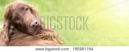 Website banner - nose of a funny dog puppy