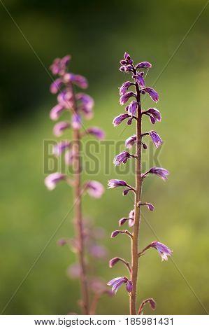 Closeup photo of beautiful purple Spring flowers