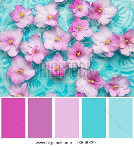 Lilac color matching and beautiful flowers on water