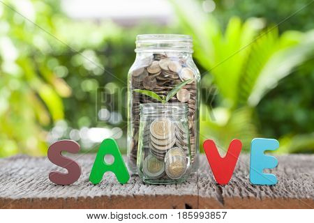 Money and sprout growing on glass in saving money concept