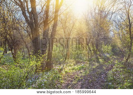 forest scene with wild flowers and sunrise in the spring