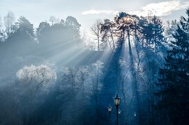 Sun rays coming through trees in winter landscape
