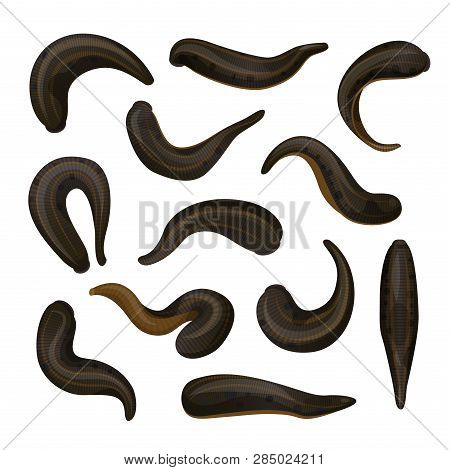 Leeches Hirudotherapy Medicine And Treatment, Therapy Animal