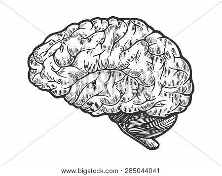 Human Brain Schematic Vintage Sketch Engraving Vector Illustration. Scratch Board Style Imitation. B
