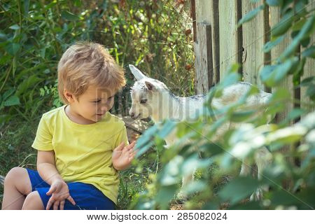 Game. Newborn White Goats In Nature With Boy Kid. Summer Landscape With Farm Animals. Domestic Goat