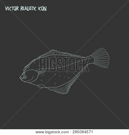 Turbot Icon Line Element. Vector Illustration Of Turbot Icon Line Isolated On Clean Background For Y