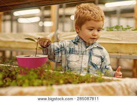 Kid Work In Orangery. Kid Work In Orangery With Flowers And Trees. Small Kid Work In Orangery Growin