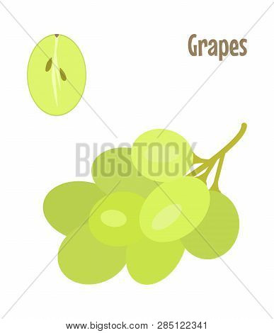 A Bunch Of Green Grapes And A Cut Piece. Raw Food Vector Illustration.