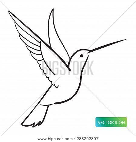 Hummingbird Icon Or Logo Design Vector Image On White Background. Hummingbird Line Logo Icon. Isolat