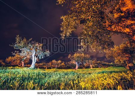 Breathtaking view of the olive garden under the moonlight. Location Sicily island, cape Milazzo, Italy, Tyrrhenian sea. Scenic image of the exotic place. Summer season. Discover the beauty of earth.