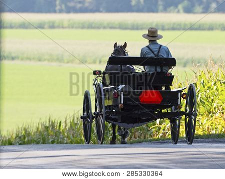 An Amish Man On A Horse And Buggy