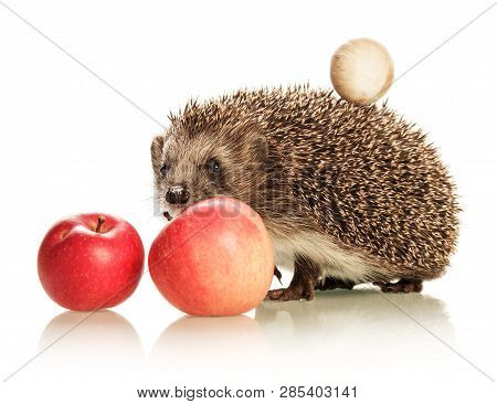 Cute Prickly Hedgehog With A Mushroom On The Back And An Apple Isolated On White Background