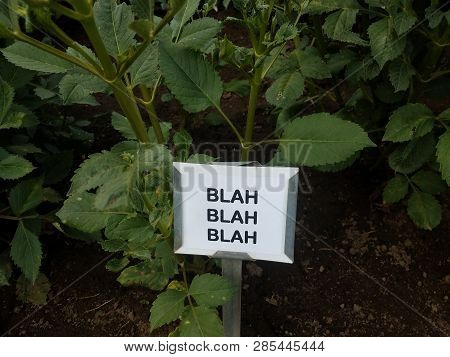Plant With Green Leaves And A Sign That Says Blah