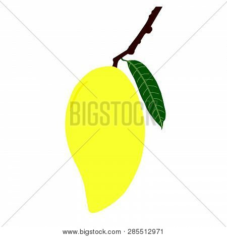 Ripe Mango And Leaf With Branch. Summer Fruit For Health And Lifestyle. Illustration Vector Icon.