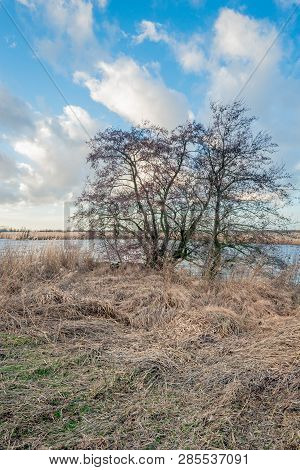 Dried Long Grass In The Foreground Of A Tree With Bare Branches At The Bank Of River. It Is At The E