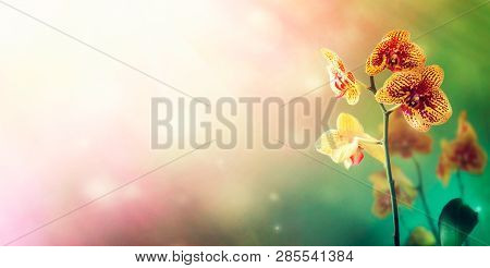 Orchid Flower Background. Spring Floral Background. Bokeh Background With Space For Text