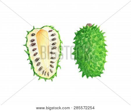 Annona Muricata. Sour Sop Fruit Exotic Tropical Watercolor. Isolated Fresh Exotic Custard Apple Frui