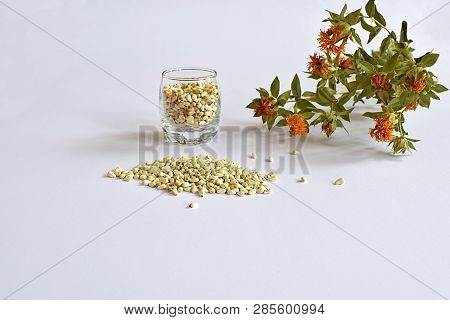 Safflower. Seeds In Containers And Scattered On A White Surface And Stems With Flowers.