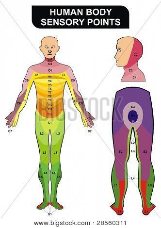 Human Body Sensory Points