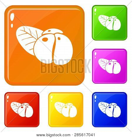 Ephedra Icons Set Collection Vector 6 Color Isolated On White Background
