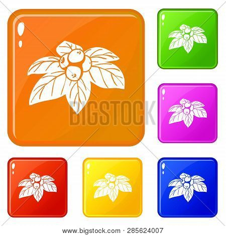 Whortleberries Icons Set Collection Vector 6 Color Isolated On White Background