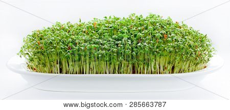 Watercress Cress Salad Green Sprouts Isolated On White