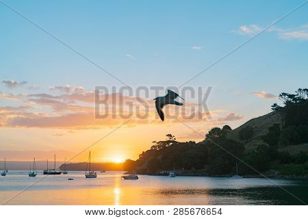 Seagull blurred in flight over scenic vista as sun sets over Pilot Bay on Tauranga Harbour with silhouette of boats and Mount Maunganui poster