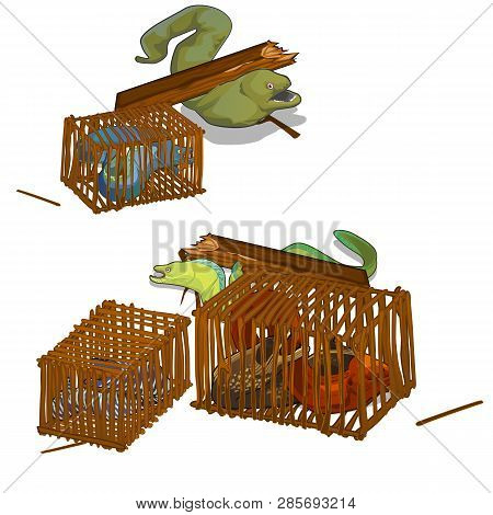 Set Of Moray Eels Caught In The Wooden Cage Isolated On White Background. Vector Cartoon Close-up Il