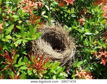 Nest in flowering bushes